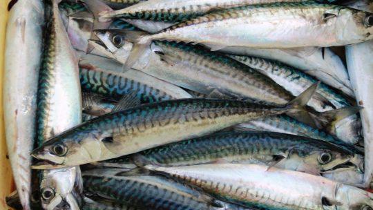 Poisson: les plus cuisiner | le poisson blanc